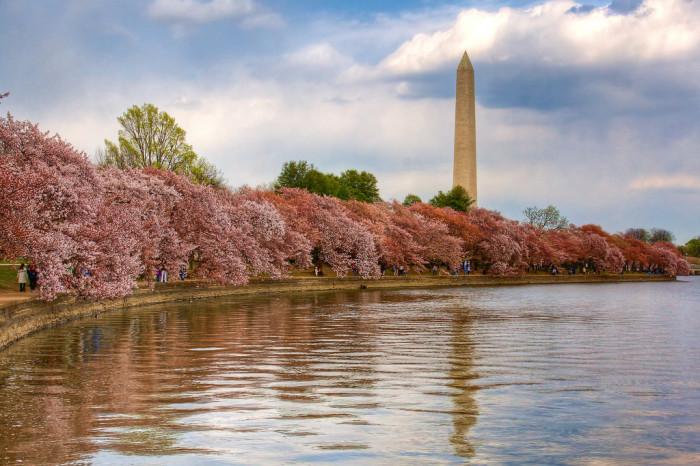 Spring in Washington D.C.? Check.