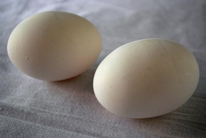 4. Egg production