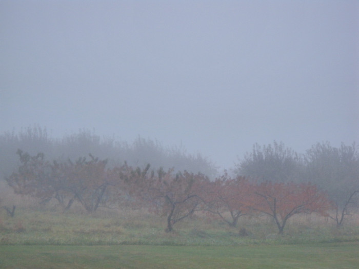5. Even in the mist this orchard is beautiful.