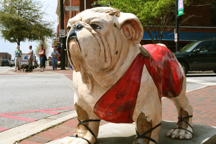 3.  Whenever you see an English bulldog walking down the street you have to double-take to make sure he isn't famous.