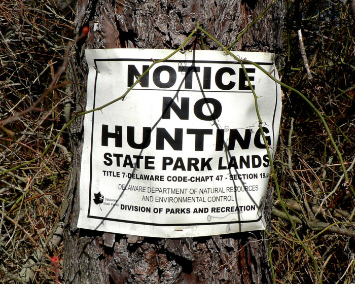 6. The only hunting you can do in Delaware on Sundays is fox hunting, with dogs.