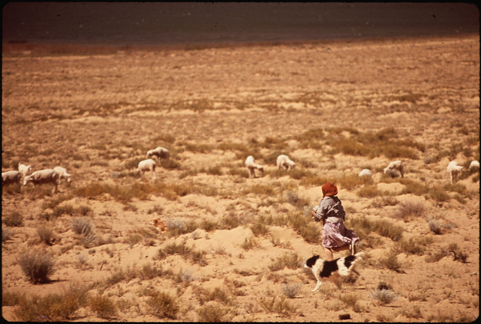 15. A Navajo woman and her trusty collie herd sheep together next to the coal-powered Four Corners Generating Station in 1972.