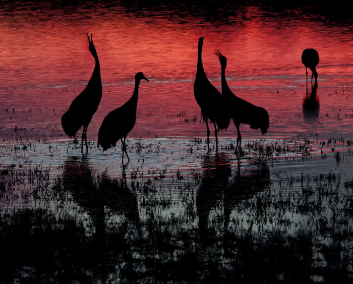 15. ...And, during migration season, waterfowl descend on Bosque del Apache National Wildlife Refuge.