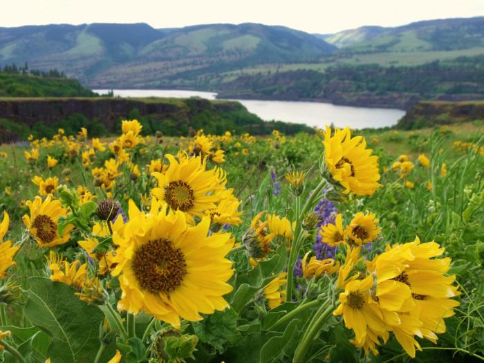 6. Take a wildflower hike.