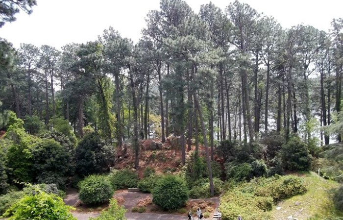 The gardens are located near the Toledo Bend Reservoir in Sabine Parish, Hodges Gardens can be found on U.S. Highway 171, 15 miles south of Many, LA, between Florien and Hornbeck.