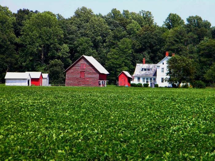 4. A quintessential small family farm in Sussex County, where the red of the barn pops against the green of the crops.