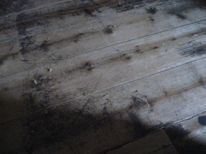 Rather than being able to bury amputated legs and arms in the ground, the doctors had no choice but to bury them under the floorboards.