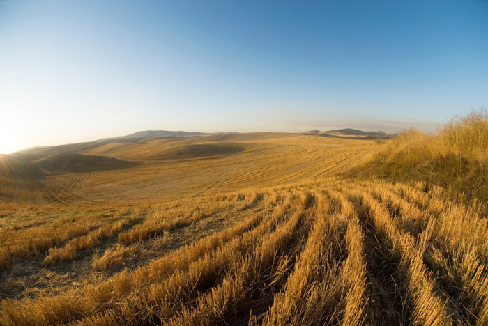 5. The fresh-cut grass fields and meandering hills.