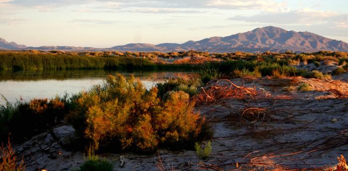 7. Visit Ash Meadows National Wildlife Refuge.