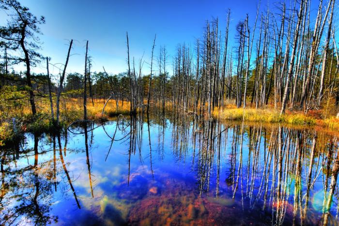 Pine Barrens Swamp