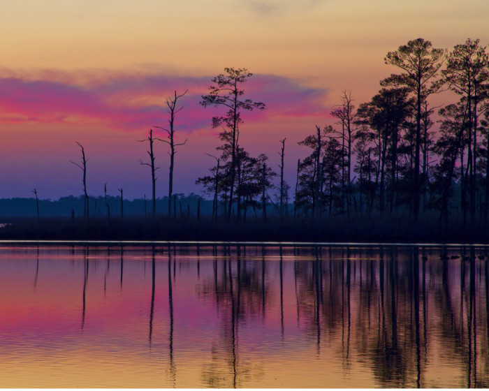 1. This cool neon sunset was captured at Blackwater National Wildlife Refuge.
