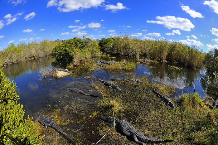 Hopefully we'll still be able to see some awesome Florida wildlife.
