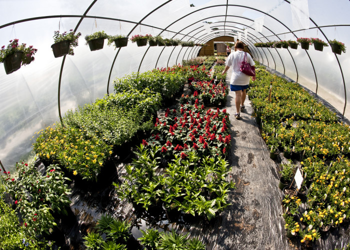 5. Producing greenhouse and nursery plants