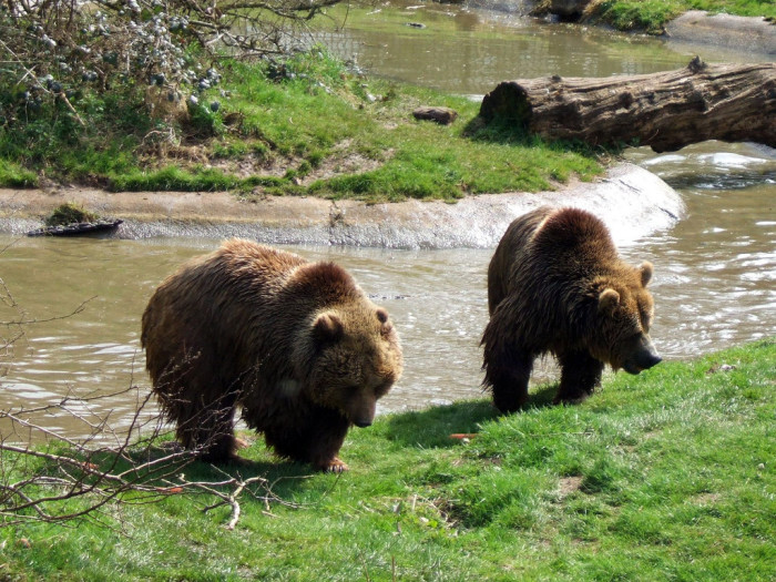 Idaho Bucket List - Bear World