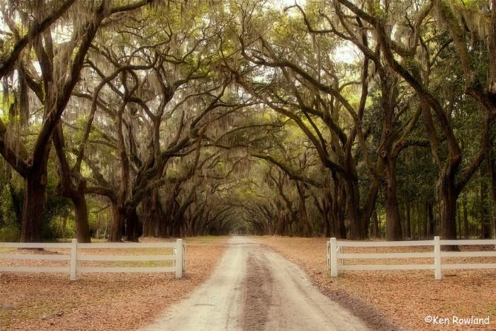 3. Explored Savannah