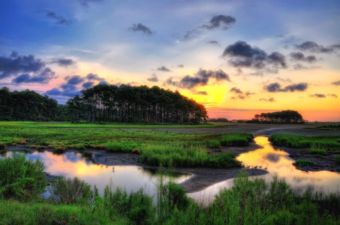 The grass might actually be greener on Chincoteague