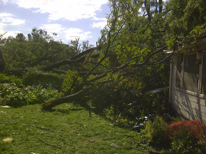3. But then you awake the next morning and your yard looks like this.
