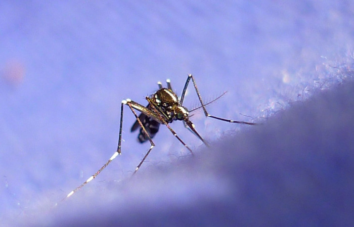 13. You could be eaten alive by mosquitoes.