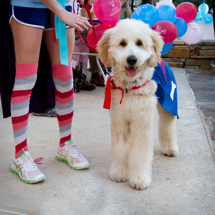 15. Bring our furry friend to the Domain's Dogtober Fest - There's even a Dachsund race with a cash prize!