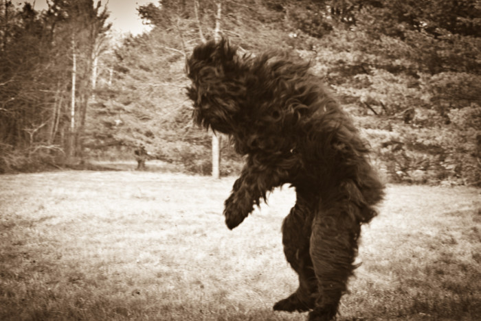 """3. The """"myth"""" of Bigfoot is a large-scale cover up."""