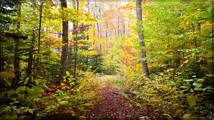7. The forest looks like a fairy tale setting.