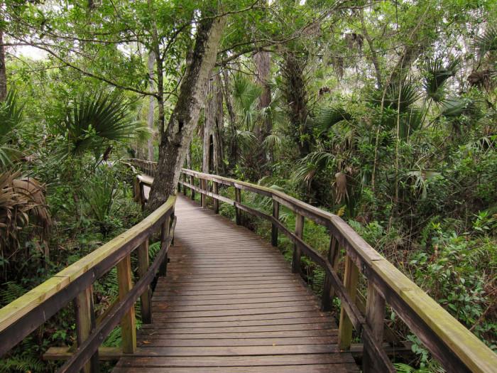 14. Fakahatchee Strand Preserve State Park, Copeland