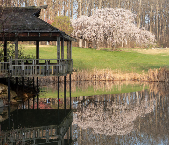 2. Brookside Gardens, Wheaton