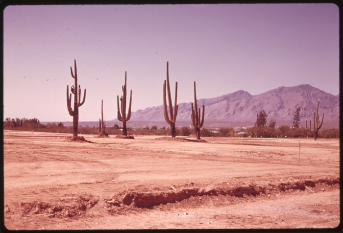 2. Just a decade before, Arizona's population boomed in a way the area had never seen before. This shows one of the results of that growth: the desert and its natural environment getting bulldozed for housing development.