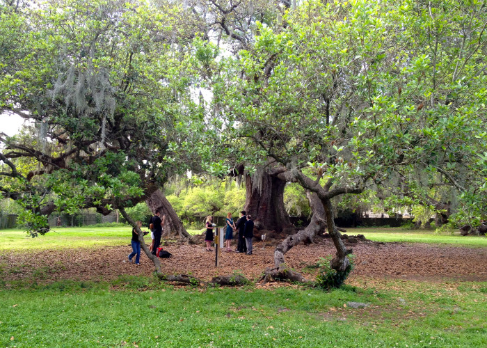 17) Relax Under the Tree of Life