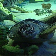 7.2. Sea Life Aquarium, Kansas City