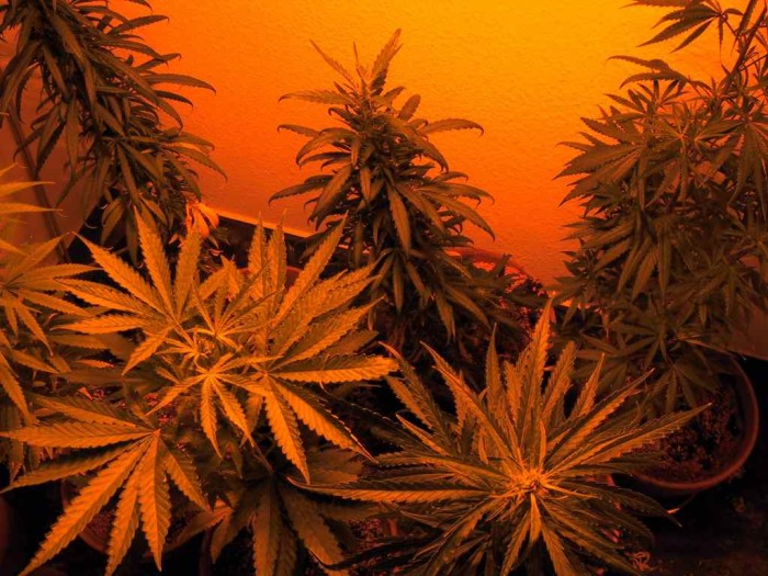 3. The first ever arrest for possession and selling of marijuana took place in Denver in 1937.