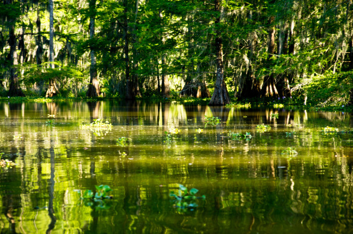3. Largest wetland and swamp in the United States