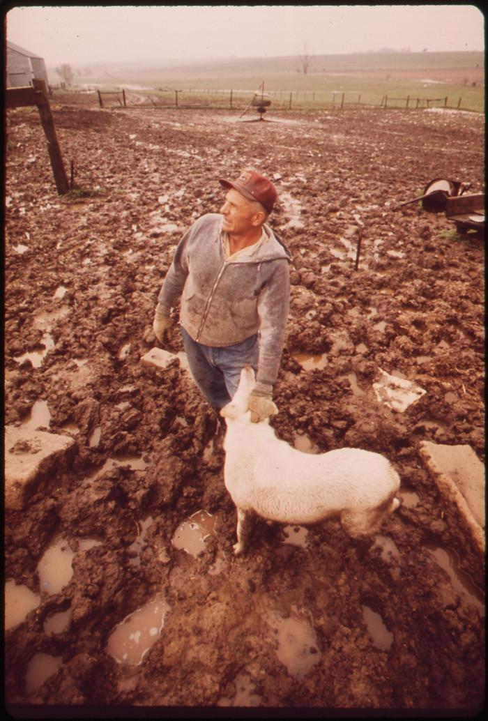 21. Farmer John Dolezal stands in a very muddy sheep pen on his farm near Bee, May 1973.