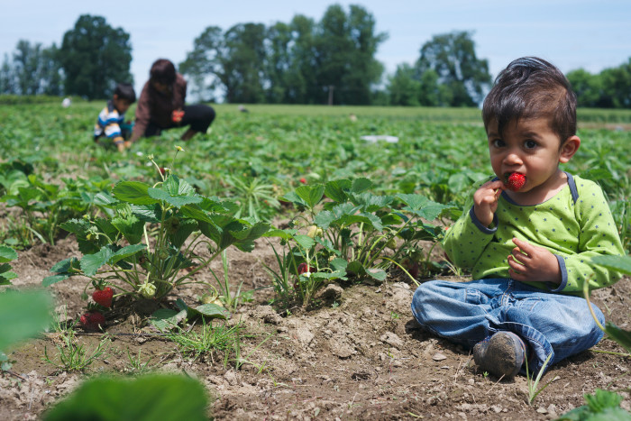 9. Pick your own delicious food at one of Oregon's wonderful U- Pick Farms.