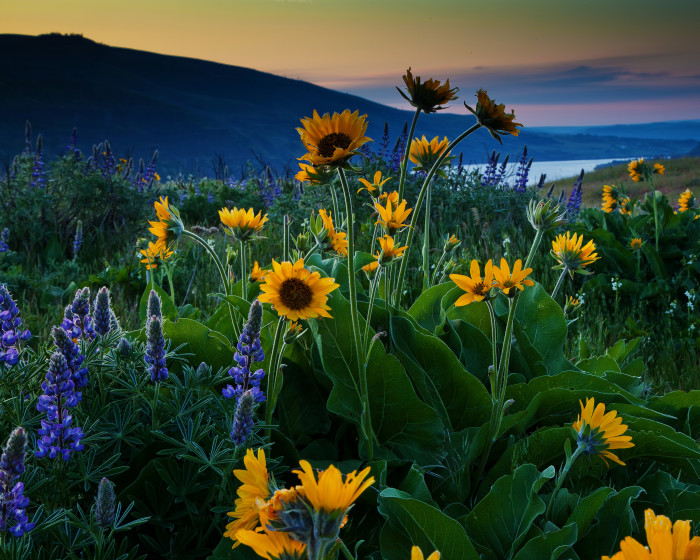 2. See the wildflowers at Rowena Crest.