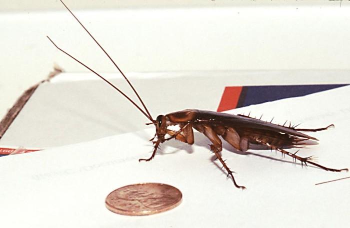 7. Cockroach