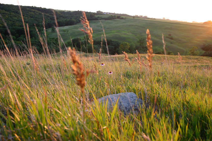 It features rolling hills full of lush prairie grasses...
