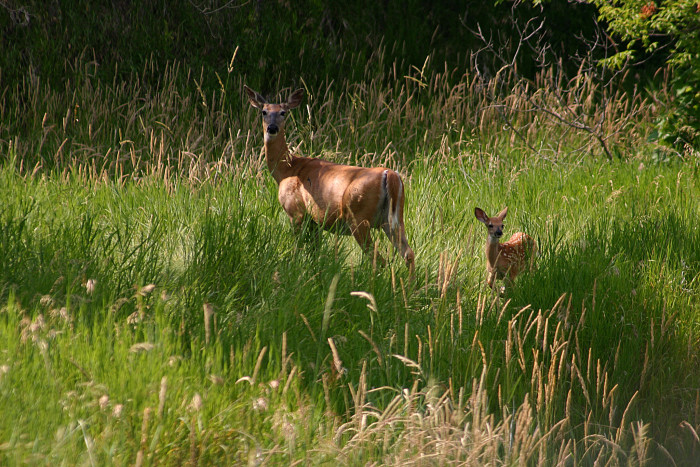 Wildlife freely roams the park. Animals are often spotted from the trails.