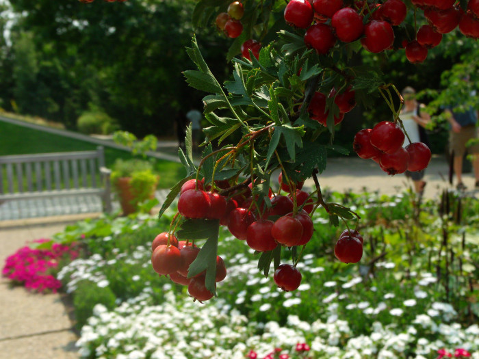 1.) Denver Botanic Gardens.