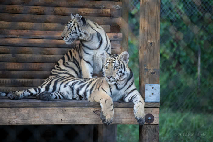 9. Treat the kids to a roaring good time at one of our awesome zoos or wildlife sanctuaries.