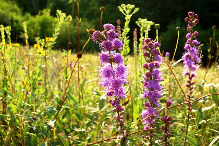 ...and beautiful wildflowers.