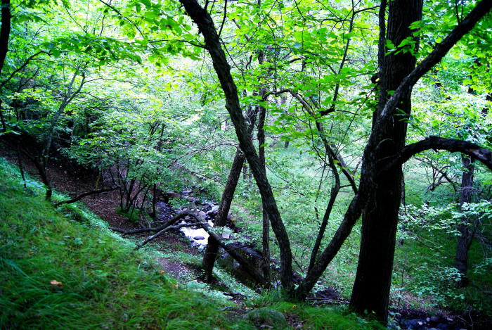 Fort Ransom State Park also includes densely forested areas with a few small creeks and parts of the Sheyenne River winding through it.