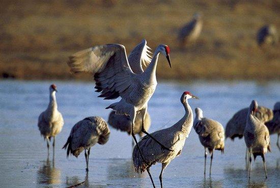4. Lodi: Bird Watching