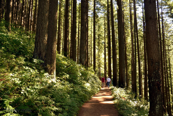 There are tons of amazing hikes in the area.