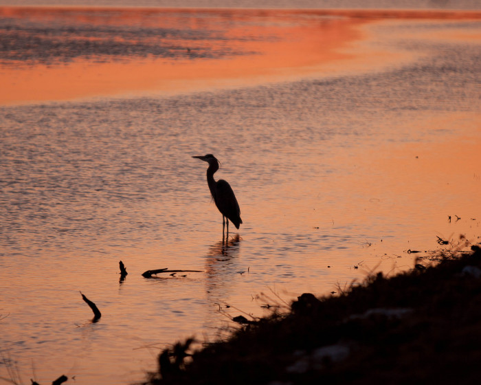 Make sure to bring binoculars and a camera because you're going to need it to witness all of the spectacular wildlife.