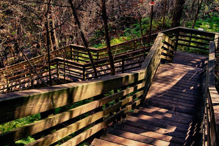 1. Devil's Millhopper Geological State Park, Gainesville