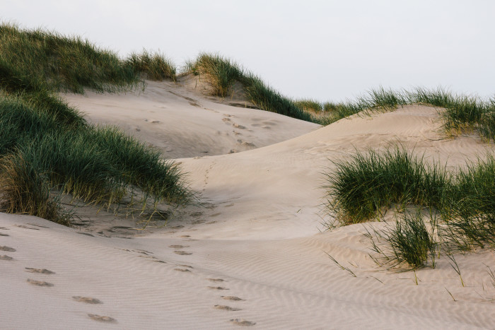 12. The Oregon Dunes