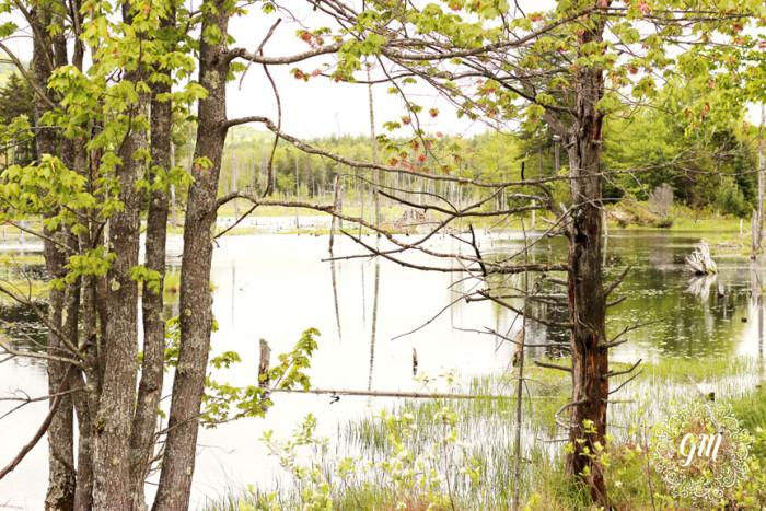 5. Ossipee Lake Natural Area, Ossippee