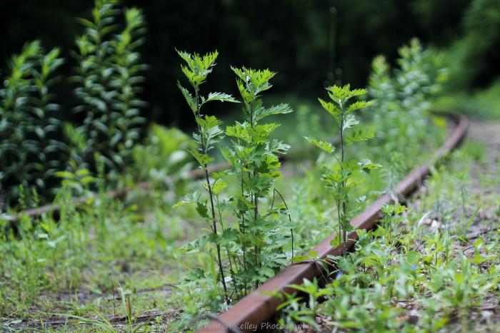 7. Abandoned train tracks in Shelton.