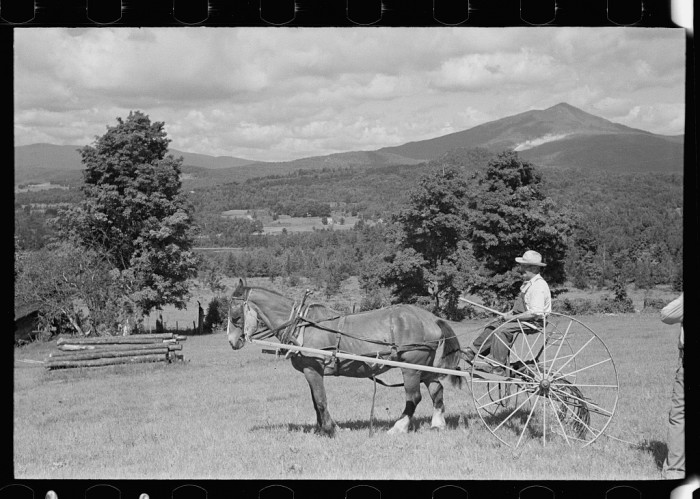 8.  Frank Kinney on a hay rake, in Eden Mills